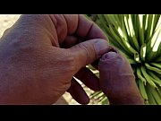Self foreskin playpiercing with agave thorn in desert